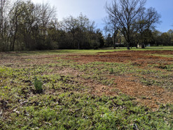 Area not growing grass due to standing water (before grading).