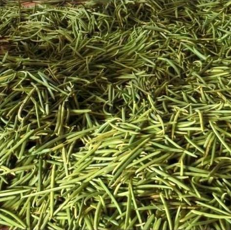 Freshly Harvested Vanilla Beans