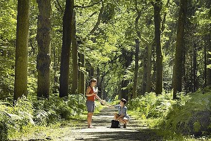 Wandelen in het Koninklijke Oranjewoud