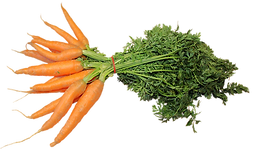 bos wortels
