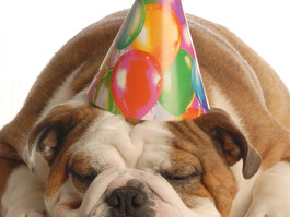 Happy 4th Birthday Seattle Pup Magazine!