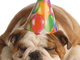 Birthday Pawties at K9 Anytime!