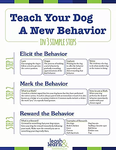 Teach Your Dog A New Behavior Final.webp