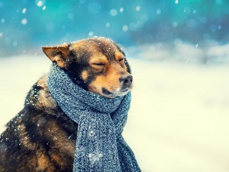 When The Snowpocalypse Comes!