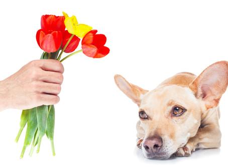 Your Flowers Make Me Wanna Puke