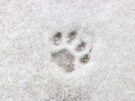 Keeping Pets Safe During Extreme Cold Weather