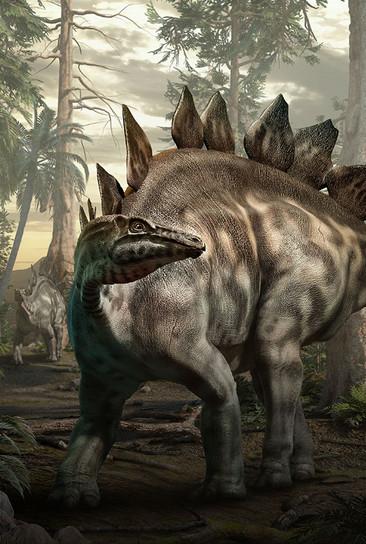 סטגוסאורוס