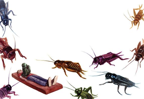 A Nightmare of Crickets