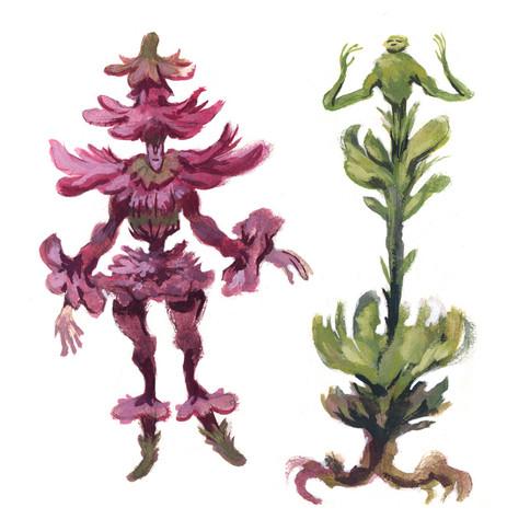 Flower Harlequin