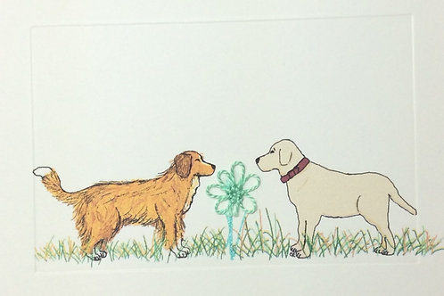 DG078 - TOLLER & WHITE LAB