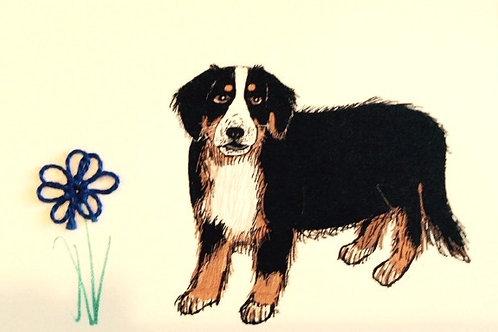 DG054 - BERNESE MOUNTAIN DOG