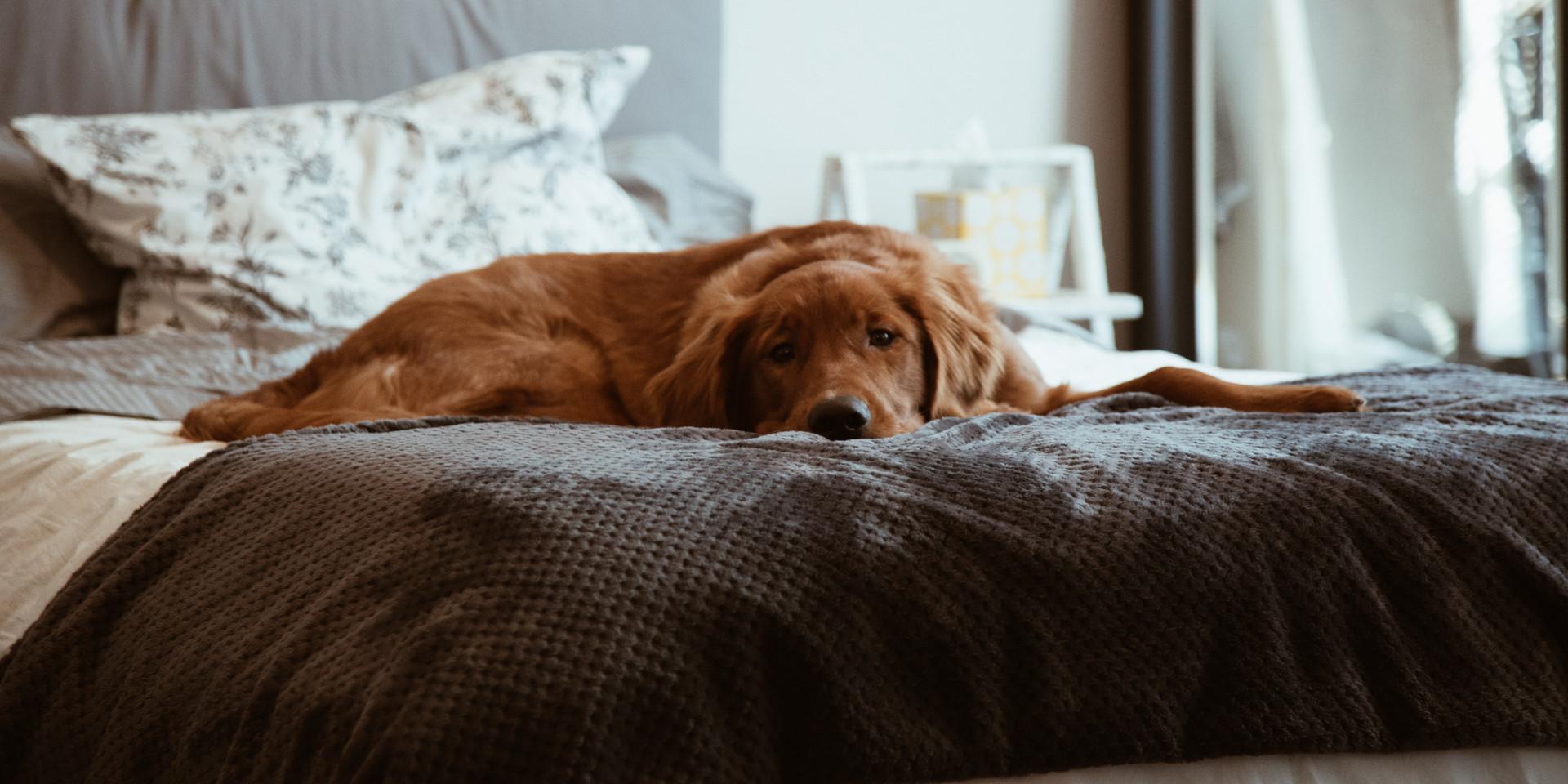 Husdjur som mår bra och är väl omhändertagna bidrar till att skapa en positiv energi i ditt hem.