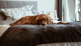 ¿Cuánto debe dormir mi #peludo?