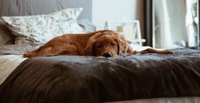 5 conseils pour aider votre animal en période post-confinement