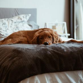 4 révélations sur le comportement canin