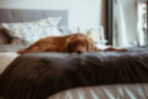Lazy Dog Brown