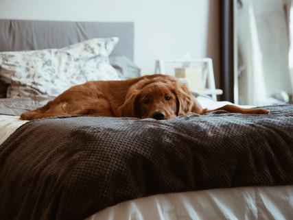 Depressão em cães: isso existe? O que é e como tratar