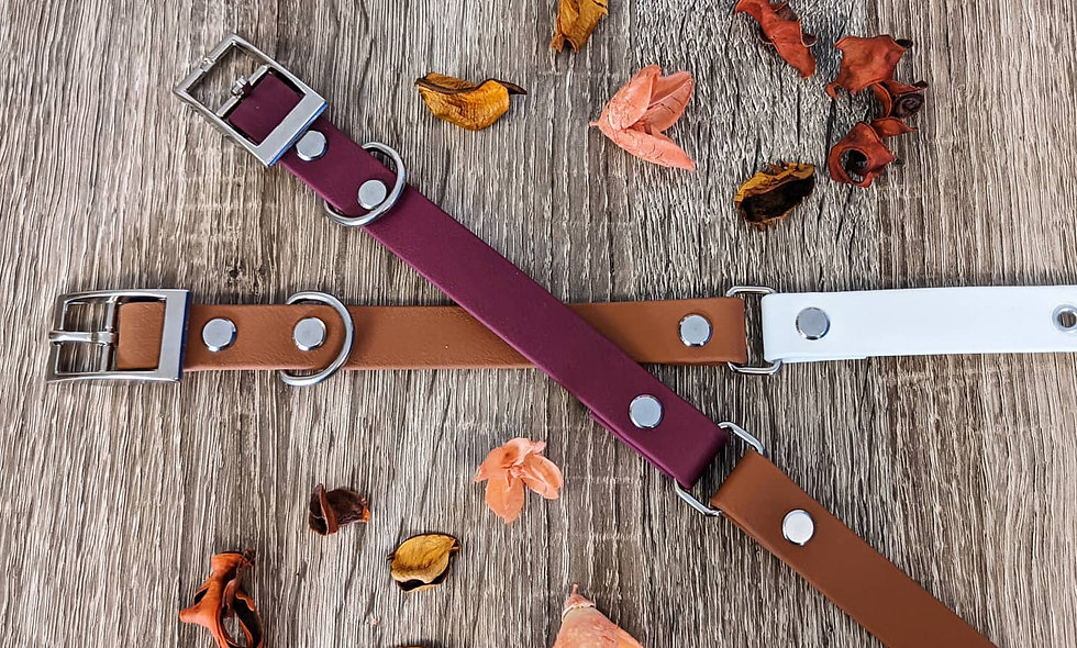 18mm Two-Tone Buckle Collar