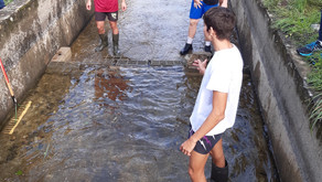 STAV 1. Nettoyage du bassin piscicole de l'Echez avant l'arrivée des oeufs de truite fario