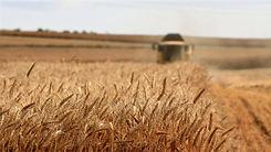 Agriculture / Farming