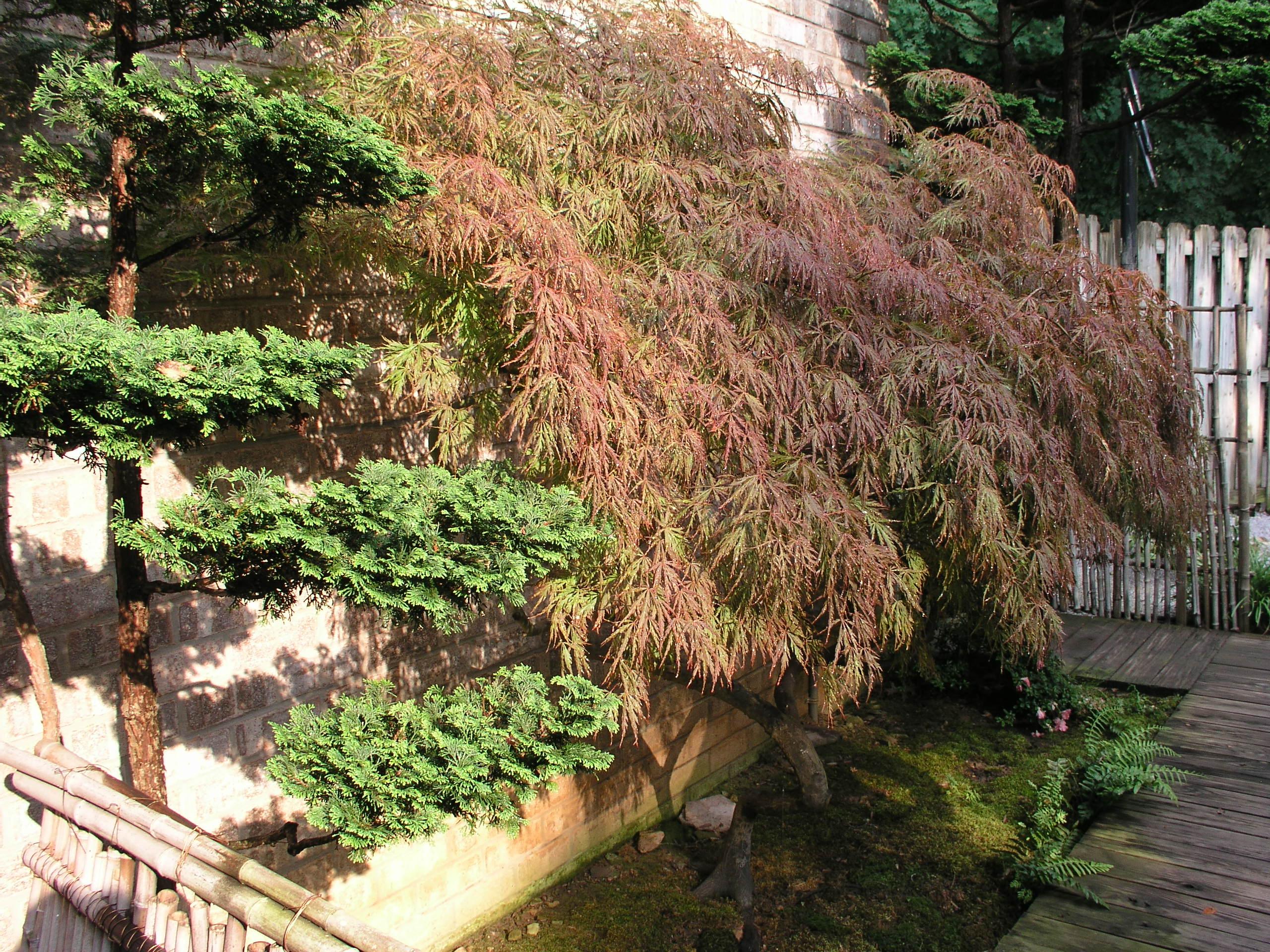 june-mays-gardens