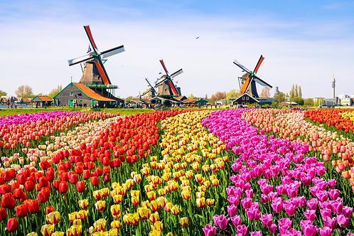 Dutch Floriade & Keukenhof   5 Days