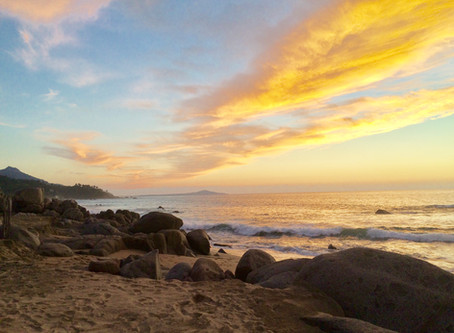 Plant-Based Cabo San Lucas Diaries