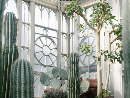 More Than Feng Shui — The Best Plants To Purify Your Air Of Indoor Toxins