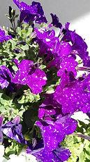 Sommerblumen.jpg