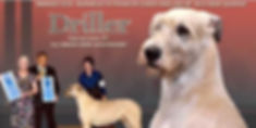 Here is the ad that came out today in the AKC Weekly Winners Gallery.jpg