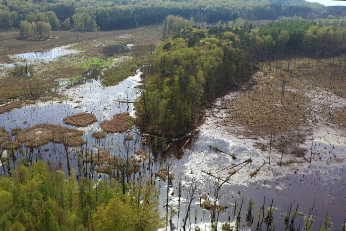 Naturschutzerfolg Wiedervernässung