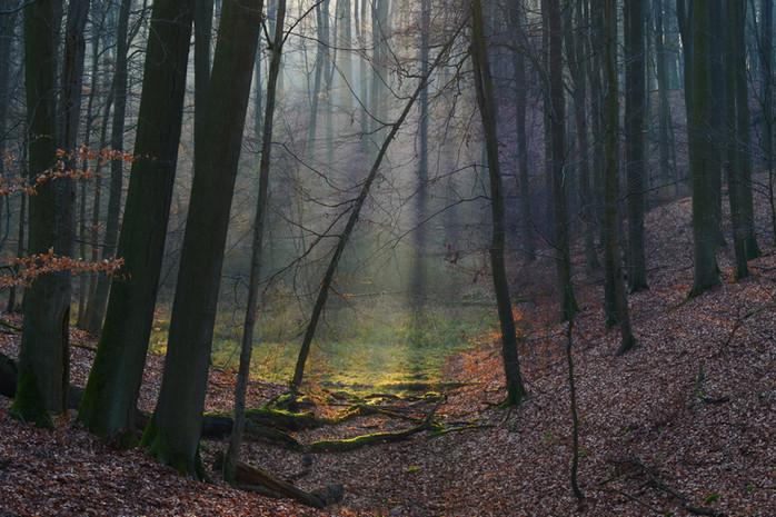 Welterbe Grumsiner Forst