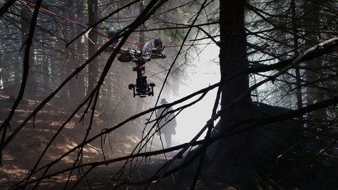 cable_cam_forest.jpg