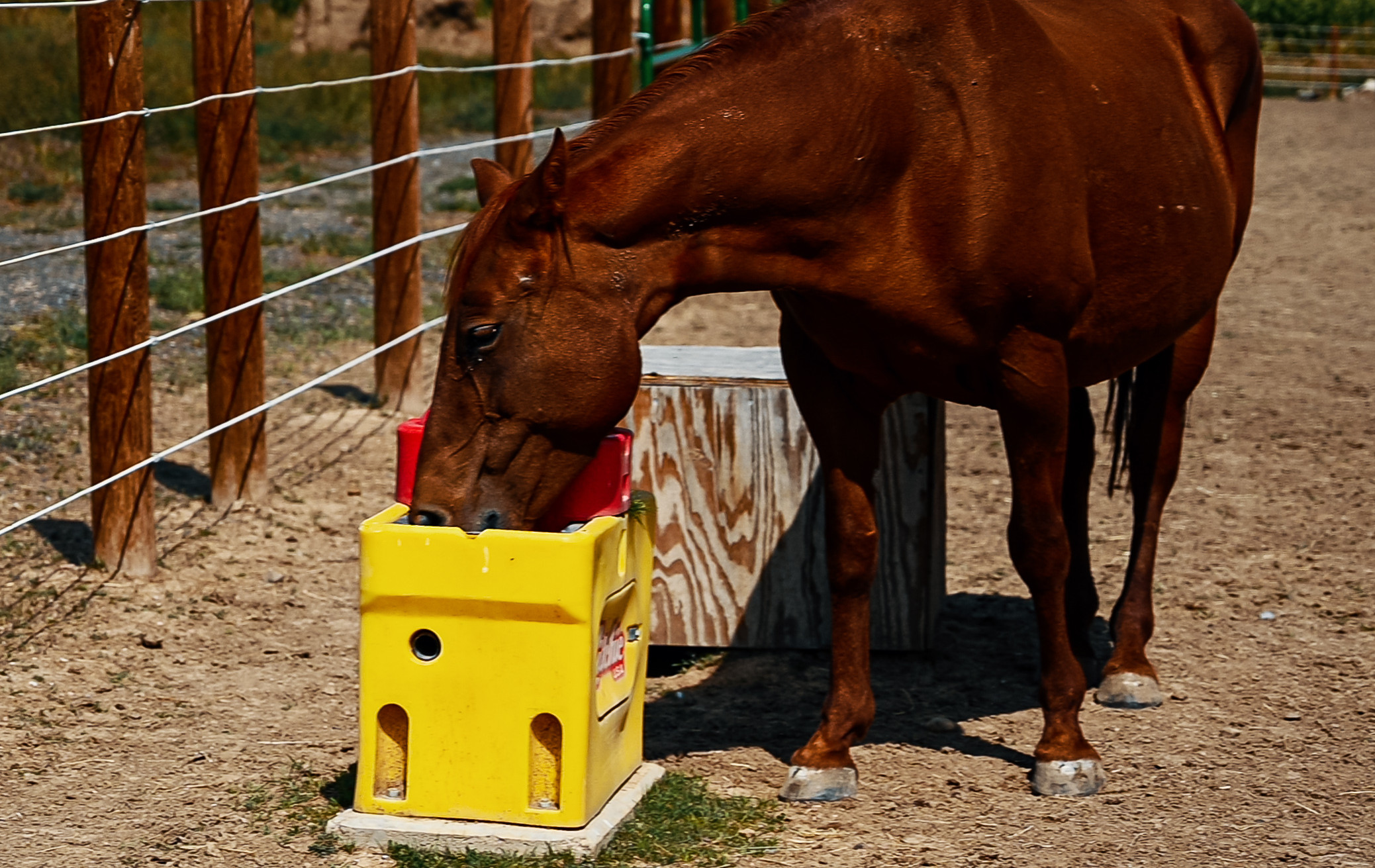 Rescued Horses | LUVIN ARMS Animal Sanctuary | Erie, Colorado
