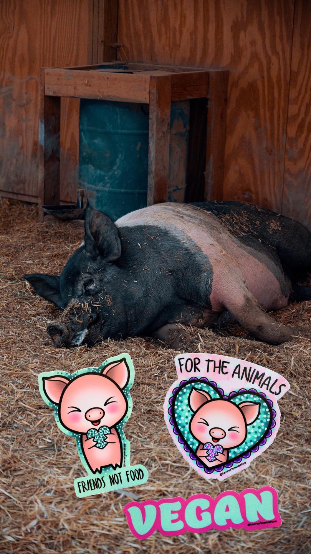Vegan Glitter KAWAII Sticker Pack - Pig are Friends Not Food!