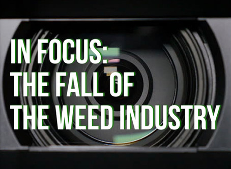 In Focus: The Fall of The Weed Industry