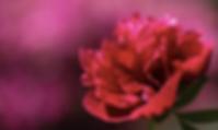 スクリーンショット 2020-06-15 16.30.02.png