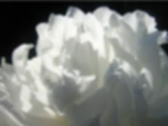 スクリーンショット 2020-06-15 16.08.24.png
