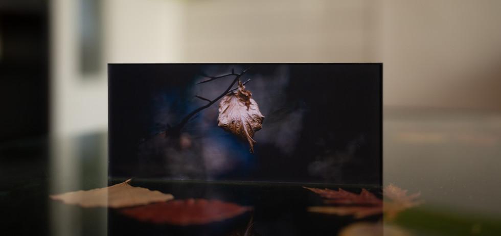 WINTER - Echter Fotoabzug   hinter 4mm Acrylglas   auf 2mm AluDibond   inkl. Aufhängung von Alexander Kästel