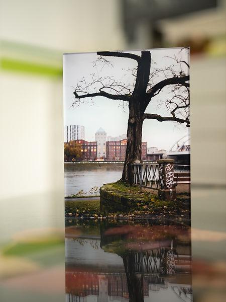 DER ARSCHBAUM am Rhein mit Blick über den Fluss zur Walzmühle Ludwigshafen. Der Baum ist mit einem Geländer verwachsen und sieht ein wenig aus, als säße er darauf.  - Echter Fotoabzug   hinter 4mm Acrylglas   auf 2mm AluDibond   inkl. Aufhängung von Alexander Kästel