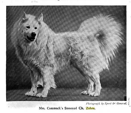 ZAHRA 1912.jpg