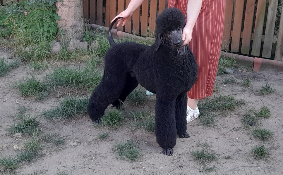 terrier clip 2021