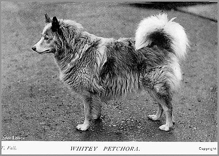 WHITEY PETCHORA.jpg