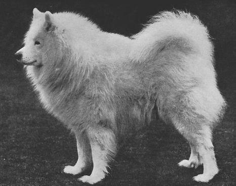 1924, CH. ENG. KARA SEA.jpg
