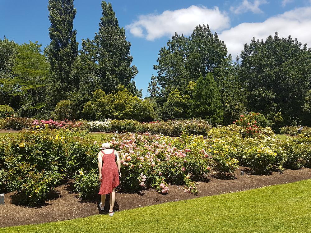 New Zealand Rose Hamilton Gardens