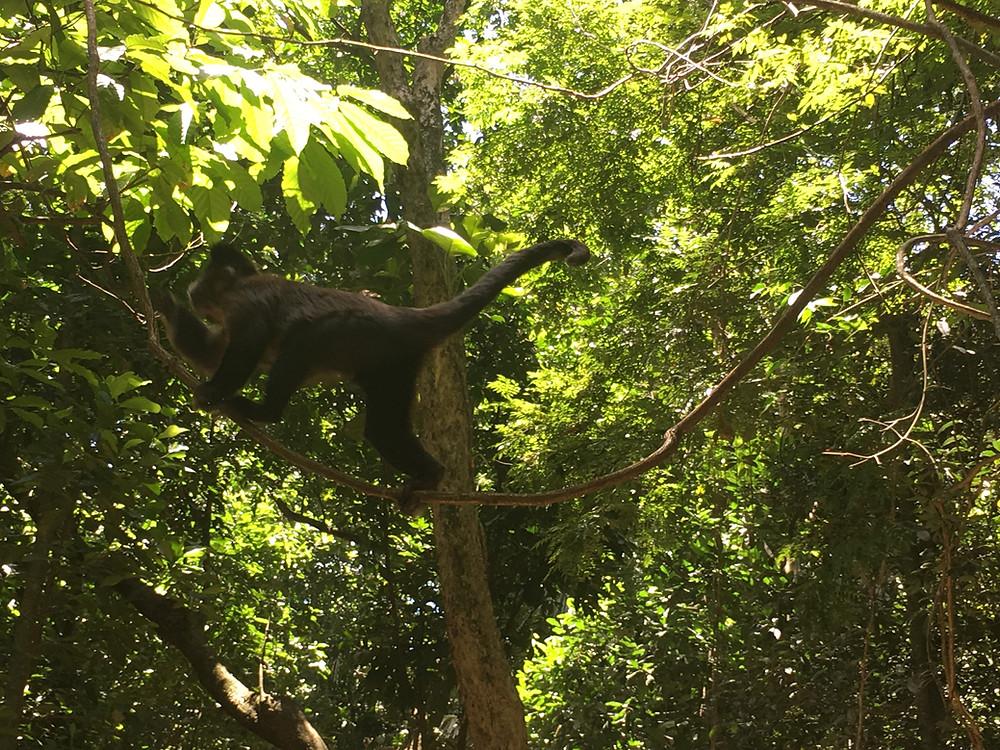 Monkeys in Jardim Botanico, Rio