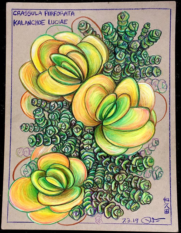 WakudaStudio_Studio_Succulent Illustrati