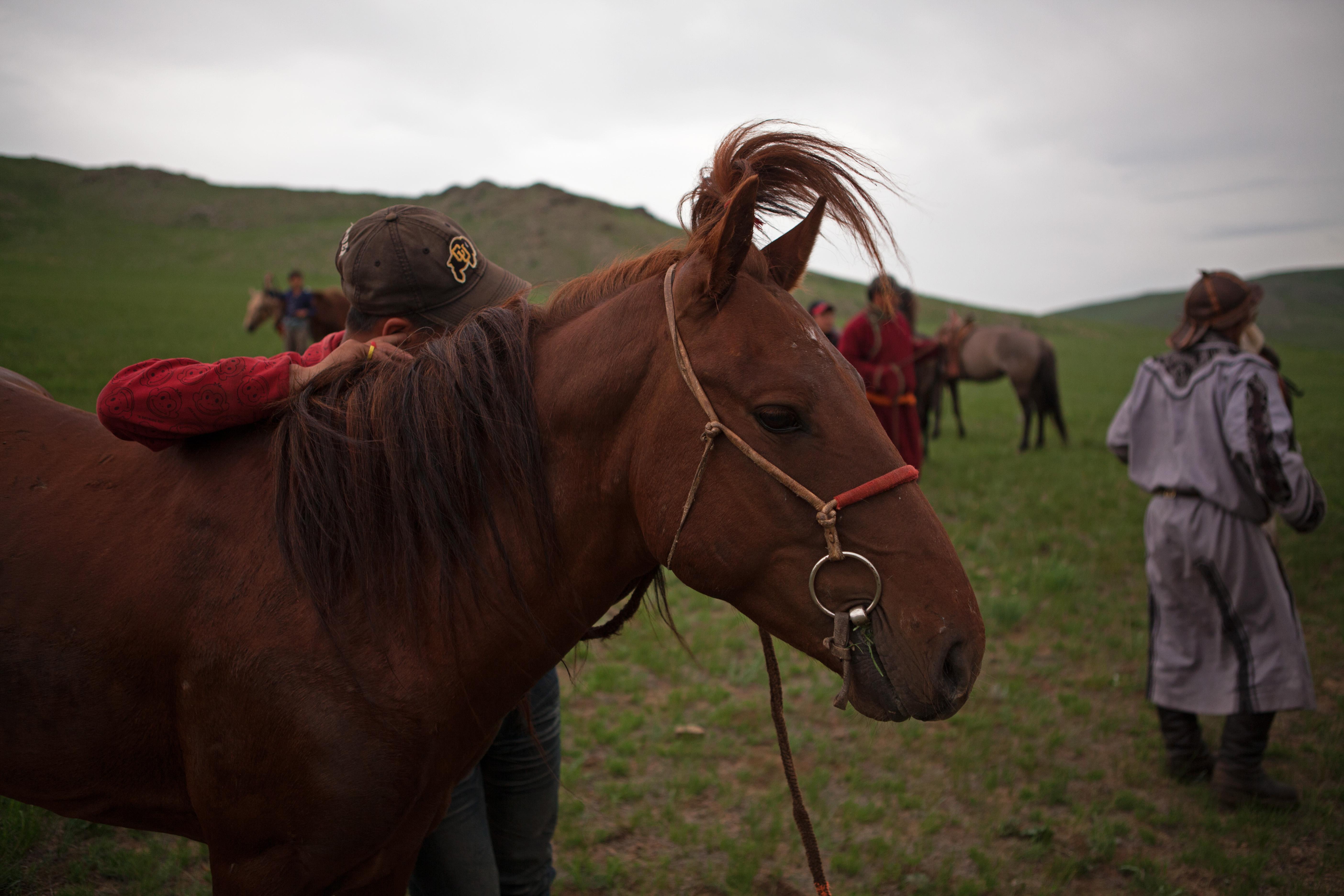 Horses still rule