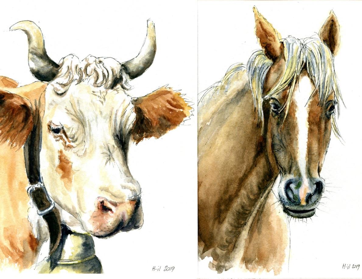 Vache et cheval
