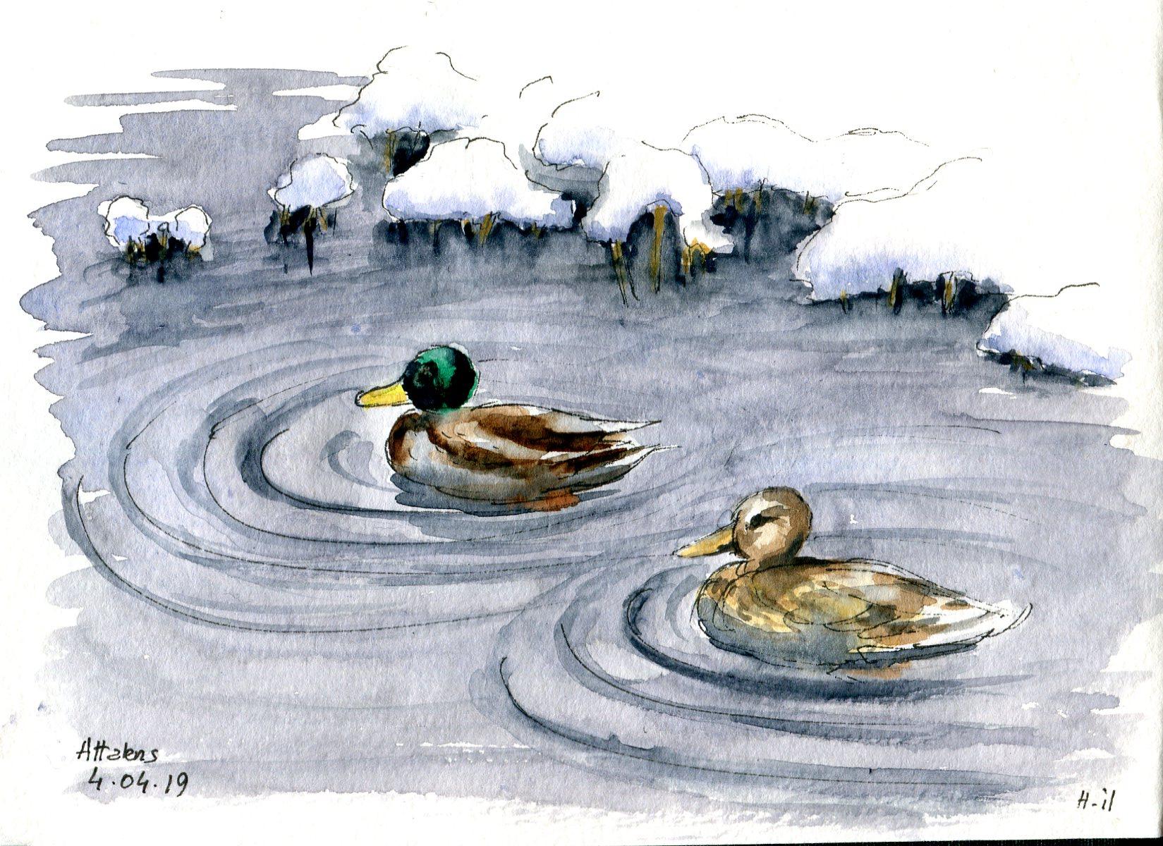 canards sous la neige